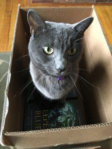 Gwen in a Box